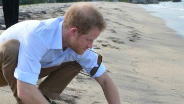 PHOTOS – Le prince Harry relâche en mer des bébés tortues