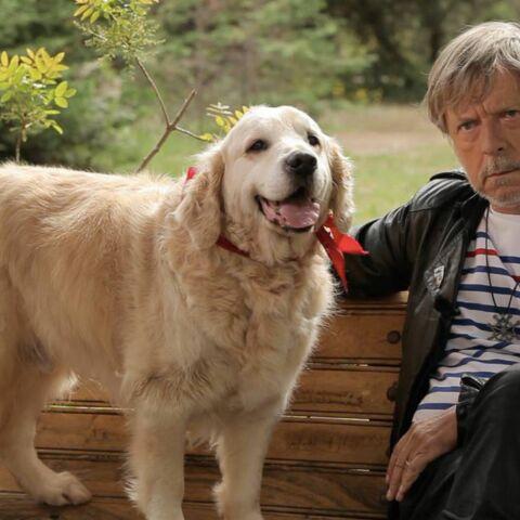 Renaud et son chien Sunny derniers invités de 30 millions d'amis