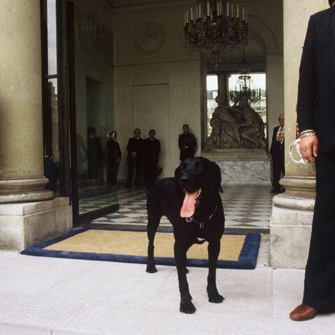 Palais de l'Elysée: quelle vie de chien!