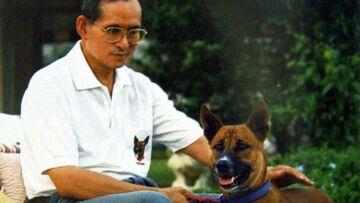 Le toutou royal qui émeut la Thaïlande