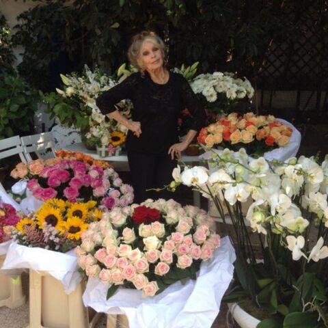 Brigitte Bardot: une avalanche de fleurs pour ses 80 ans