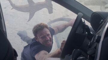Comment une tornade de requins a pris la planète d'assaut