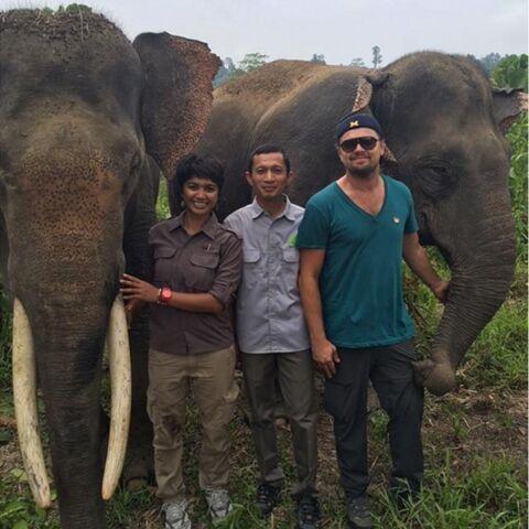 Leonardo DiCaprio en croisade écologique à Sumatra