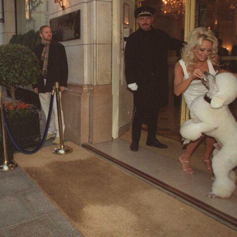 Pamela Anderson, les préservatifs et les chiens