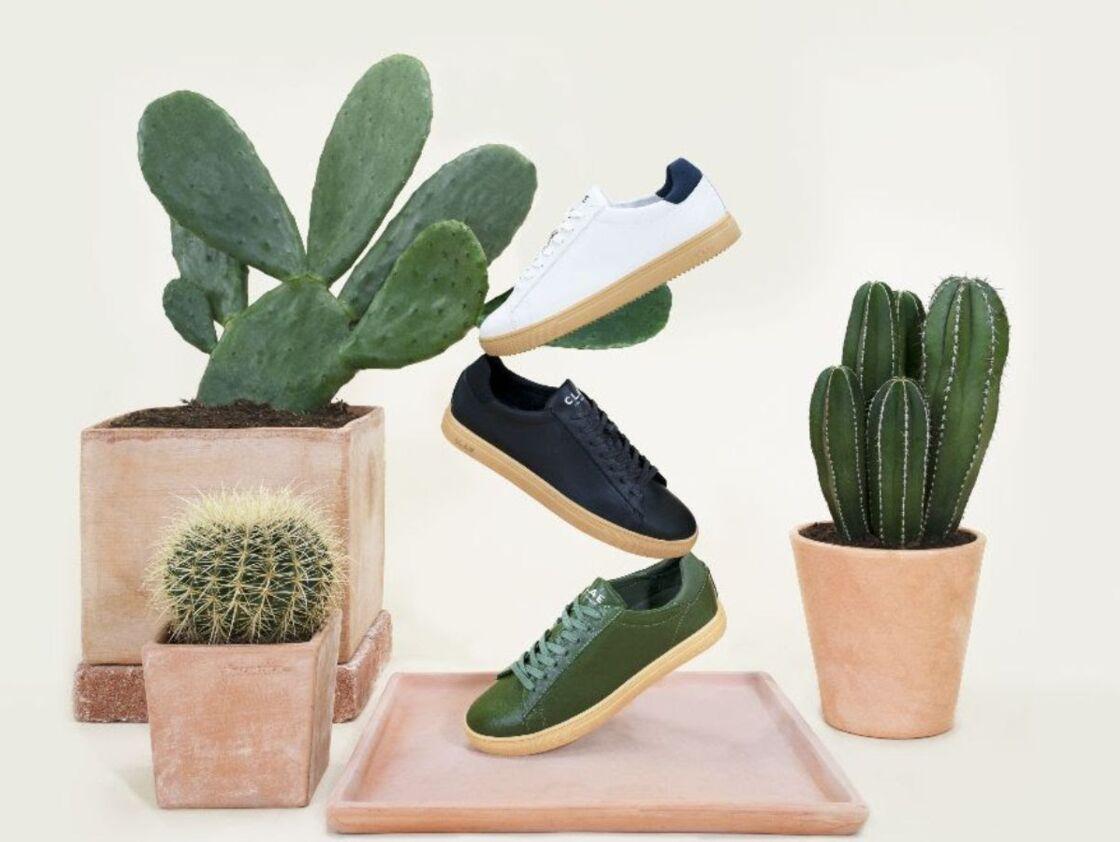 Bradley Cactus, CLAE