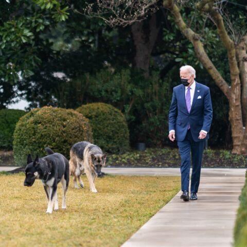 Coup dur pour Joe Biden: ses chiens renvoyés de la Maison-Blanche