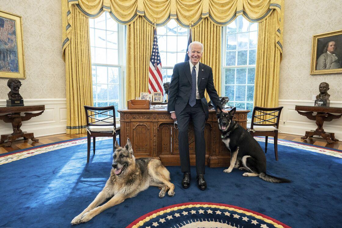 Joe Biden pose tout sourire, aux côtés de ses deux chiens, Champ et Major, dans le bureau ovale de la Maison Blanche à Washington, en février 2021.