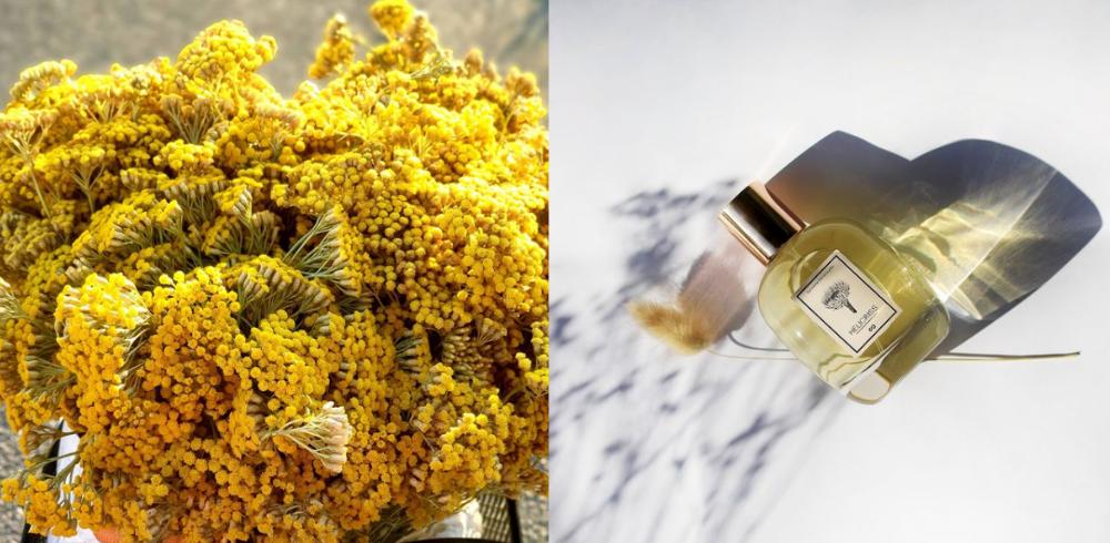 Une fleur difficile à travailler pour les parfumeurs, mais qui confère à leurs créations un caractère unique.