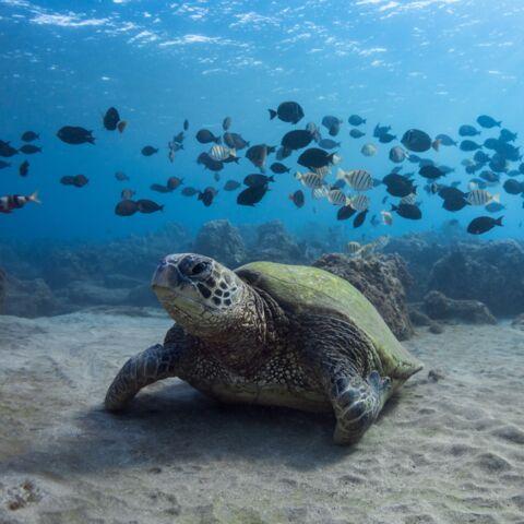 Journée de l'Océan:  No More Plastic Kids invite les enfants à déclarer leur ode à l'Océan