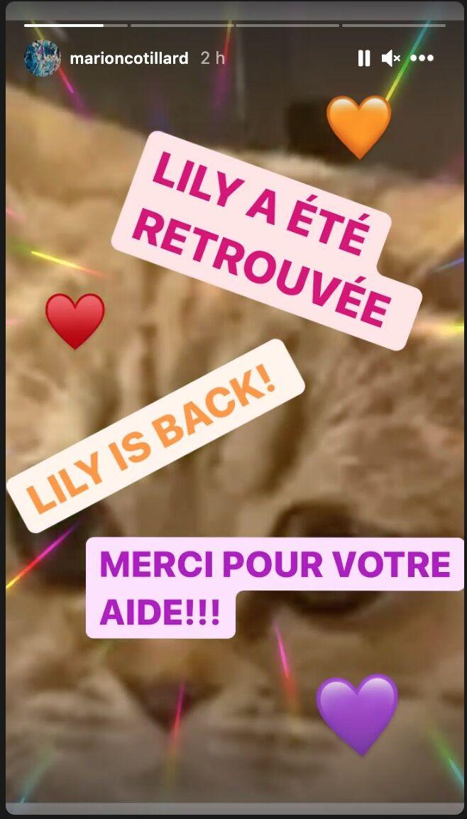 Marion Cotillard remercie ses abonnés sur Instagram : elle a retrouvé son chat !