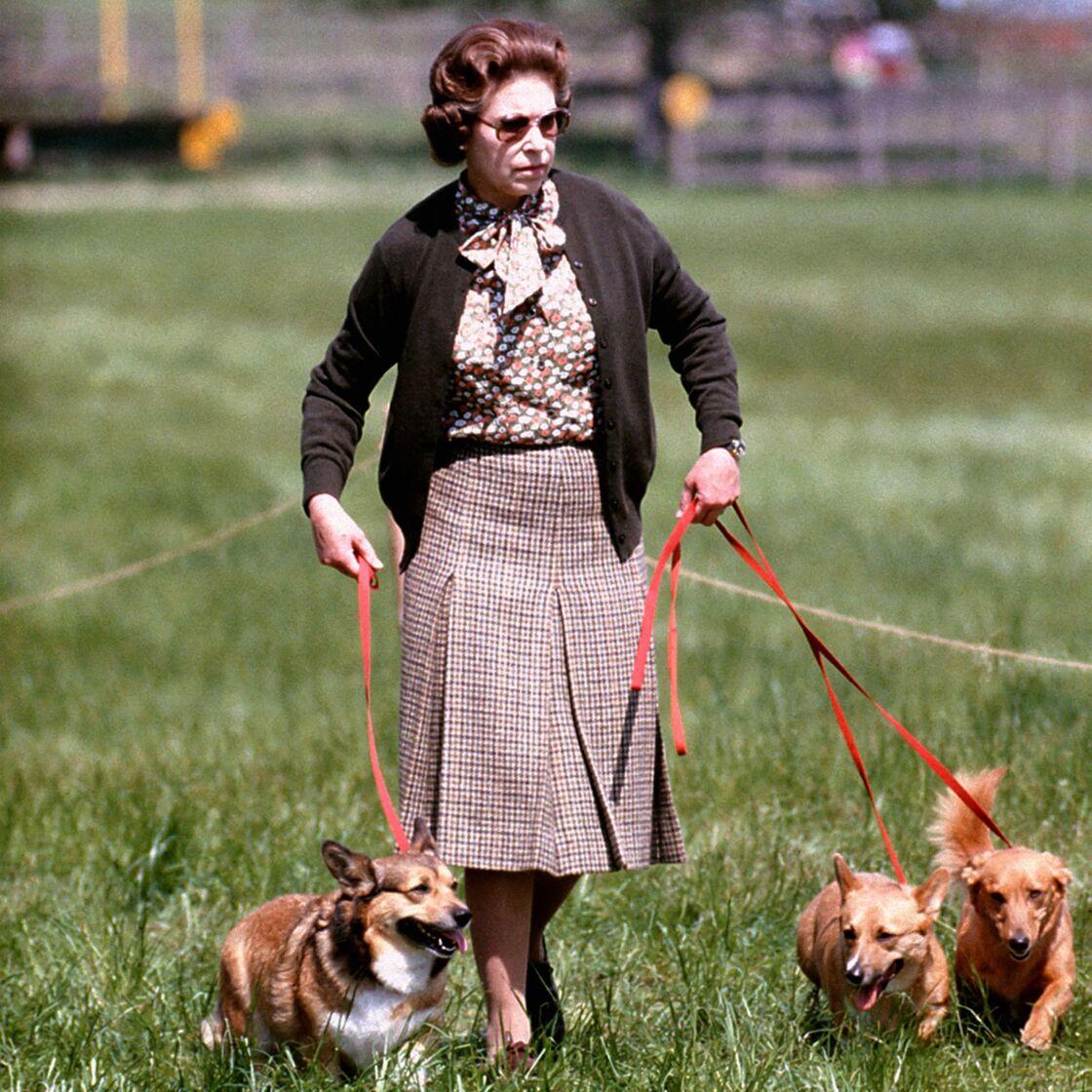 Elizabeth II avec ses chiens en 2015