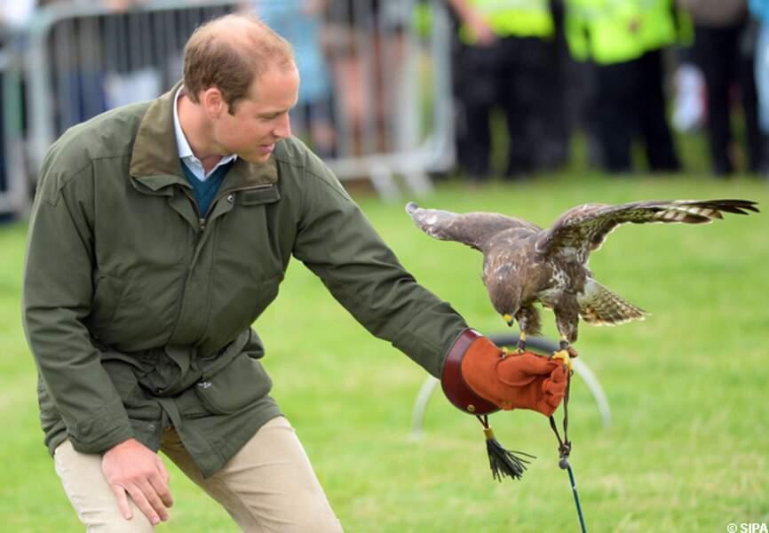 Prince William, dresseur d'aigle