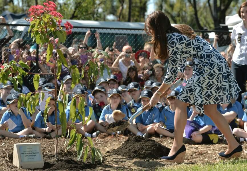 Catherine plante son eucalyptus 'Red Summer'