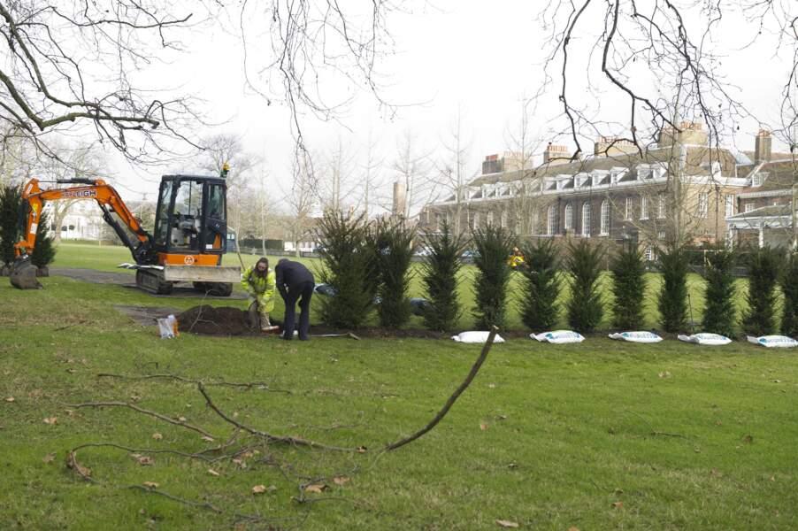 Des arbres sont plantés devant le palais de Kensington à Londres
