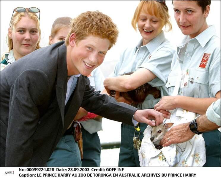 Le prince Harry visite le zoo de Toronga en Australie, en 2003