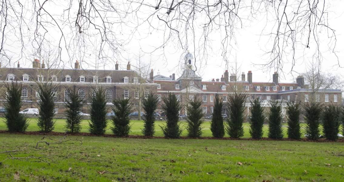 Les arbres constituent un mur végétal à Kensington Palace.