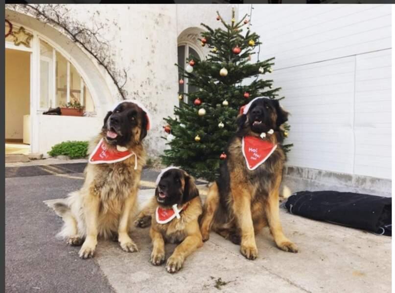 """Grâce à ses """"bébés"""" de 80 kg, Noël a fière allure !"""