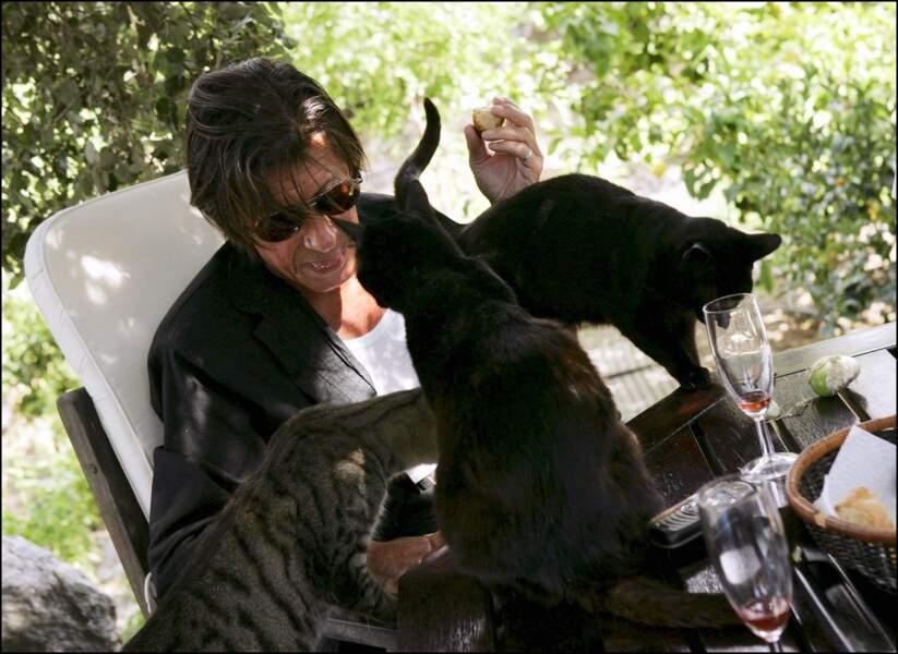 """Jacques Dutronc, à l'état """"sauvage"""" avec ses chats, à Monticello, en Corse, où il vit désormais à l'année."""