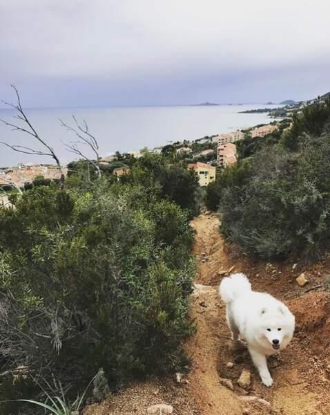 Promenade de santé pour Jon Snow en Corse