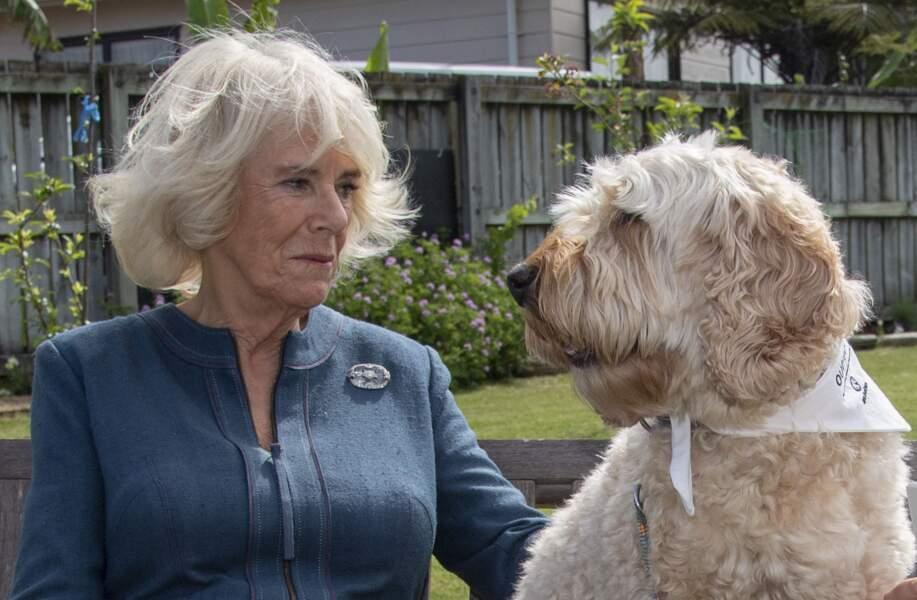 """20 novembre 2019 : Camilla Parker Bowles en visite du site naturel """"Waitangi Treaty Grounds"""" lors d'un voyage officiel en Nouvelle-Zélande."""