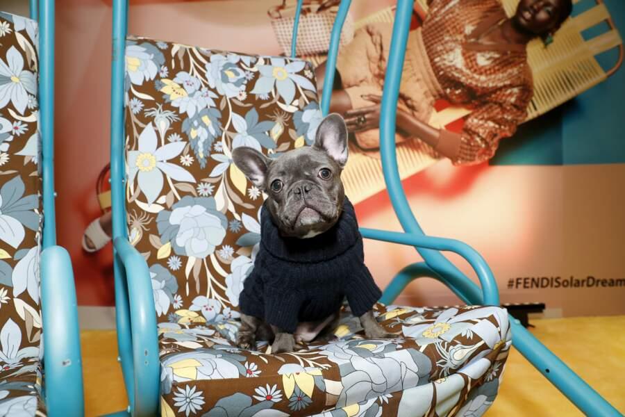 Charlie, le Bulldog français sage comme une image à la présentation !