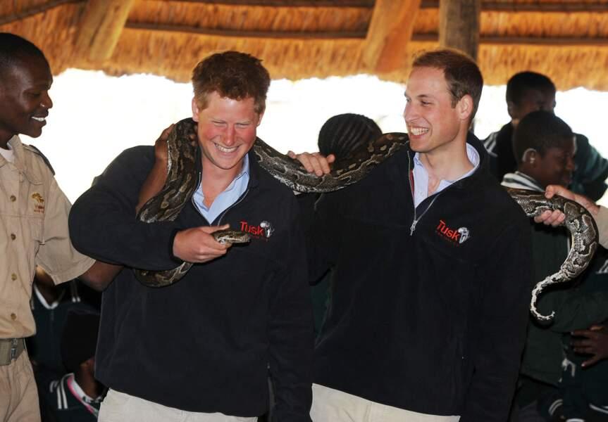 Même pas peur ! Très attachés tous les deux au continent africain, Harry et William visitent une réserve animale au Botswana.