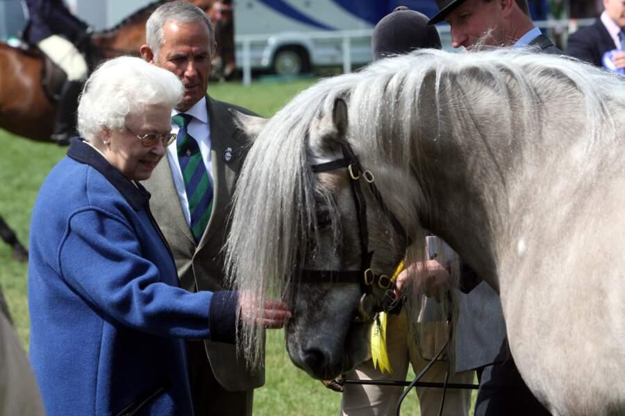 Elizabeth II regarde un cheval prêt à participer à un concours en 2011